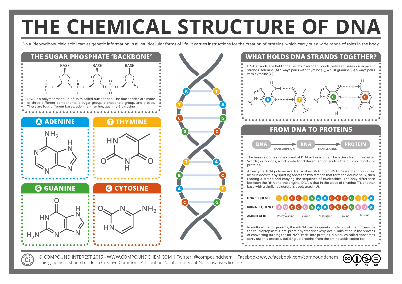 Nucleic Acid Structure Dna Macro-molecules nuclei...